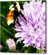 Spring Bee Canvas Print