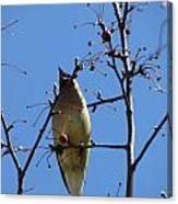 Spring Bird Singing Canvas Print