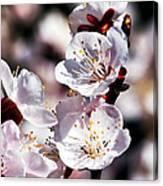 Spring Bloom 3 Canvas Print