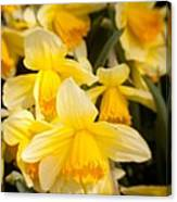 Spring Blooms 6739 Canvas Print