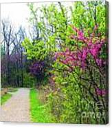 Spring Blooms Along The Path Canvas Print
