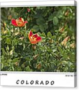 Spring Blooms In Colorado Canvas Print