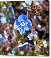 Spring Blooms Of 2013 F Canvas Print