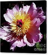 Spring Blossom 12 Canvas Print