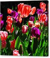 Spring Blossom 5 Canvas Print