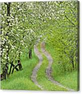 Spring Blossom Road Canvas Print