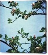 Spring Blossoms 2.0 Canvas Print