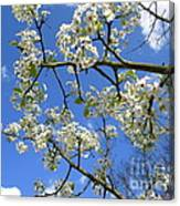 Spring Blossoms 2014 Canvas Print