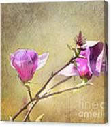 Spring Blossoms - Digital Sketch Canvas Print