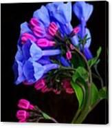 Spring Bluebells Canvas Print