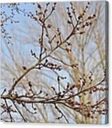 Spring Bound Canvas Print