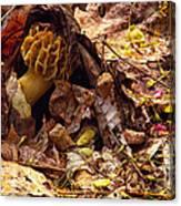 Spring Bounty Morel Mushroom Canvas Print