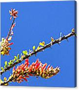 Spring Buds 32815 Canvas Print