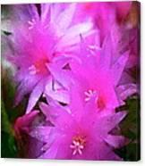 Spring Cactus Canvas Print