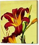 Spring Candor Canvas Print