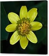 Spring Cheer Canvas Print