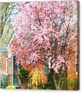Spring - Cherry Tree By Brick House Canvas Print
