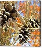 Spring Cones Canvas Print