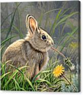 Spring Cottontail Canvas Print