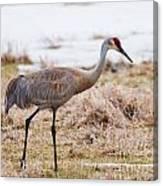 Spring Crane Canvas Print