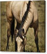 Spring Creek Basin Wild Horse Grazing Canvas Print