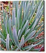 Spring Daffodil Plant Canvas Print