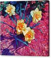 Spring Daffodils On Red - Horizontal Canvas Print