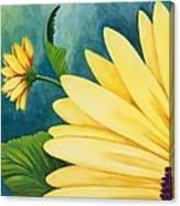 Spring Daisy Canvas Print