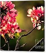 Spring Dance Canvas Print