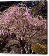 Spring Day In Park Canvas Print