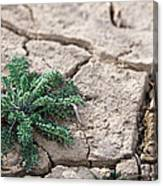 Breaking Of The Drought Canvas Print