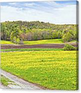 Spring Farm Landscape With Dirt Road And Dandelions Maine Canvas Print
