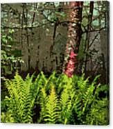 Spring Ferns Of The Blue Ridge 3 Ap Canvas Print