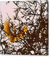 Spring Flight Canvas Print