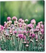 Spring Floral Background Canvas Print