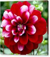 Red Spring Flower Canvas Print