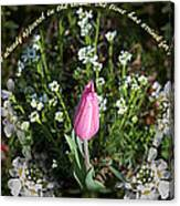 Spring Flower Pano Canvas Print