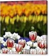 Spring Flowers 11 Canvas Print