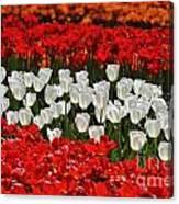 Spring Flowers 16 Canvas Print