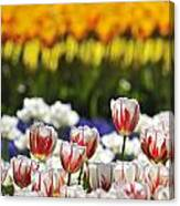 Spring Flowers 2 Canvas Print