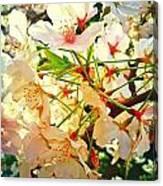 Spring Flowers 27 Canvas Print