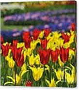 Spring Flowers 4 Canvas Print