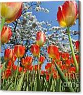 Spring Flowers 7 Canvas Print