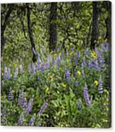 Spring Flowers In The Columbia Gorge Canvas Print