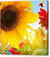 Spring Flowers In The Garden Canvas Print
