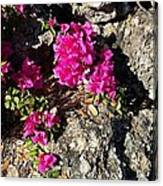 Spring From Rocks Canvas Print