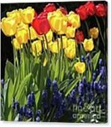 Spring Garden Sunshine Square Canvas Print