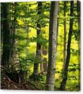 Spring Green Vertical Forest  Canvas Print