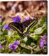 Spring Has Arrived Canvas Print