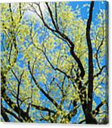 Spring Has Come - Featured 3 Canvas Print